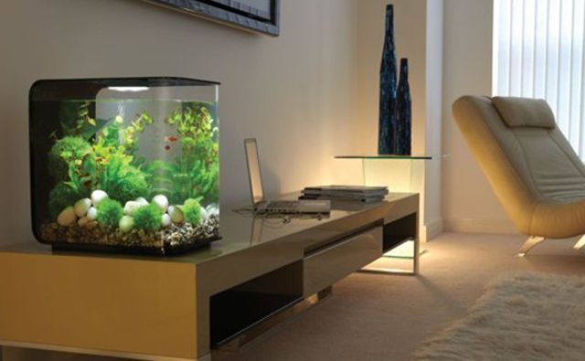 akvarium.jpg (29.15 Kb)