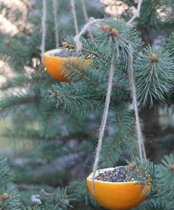 apelsin.jpg (119.75 Kb)
