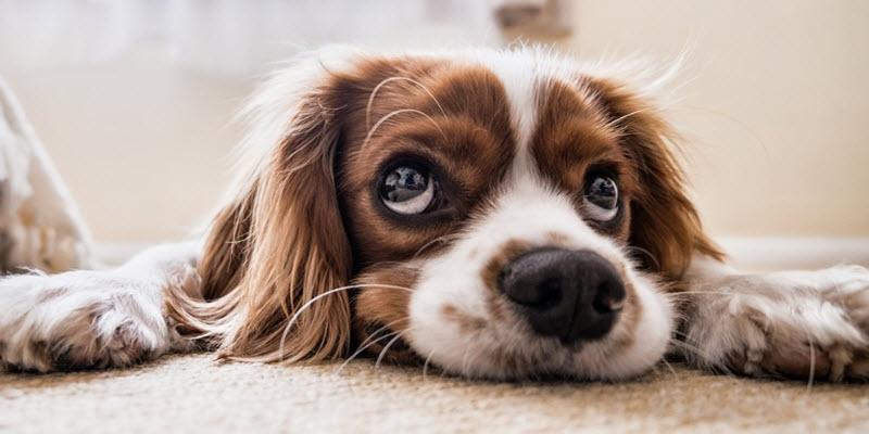 Дім для собаки: будова