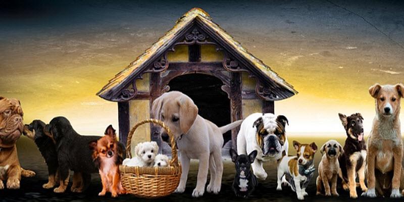 Дім для собаки: конструктивні нюанси