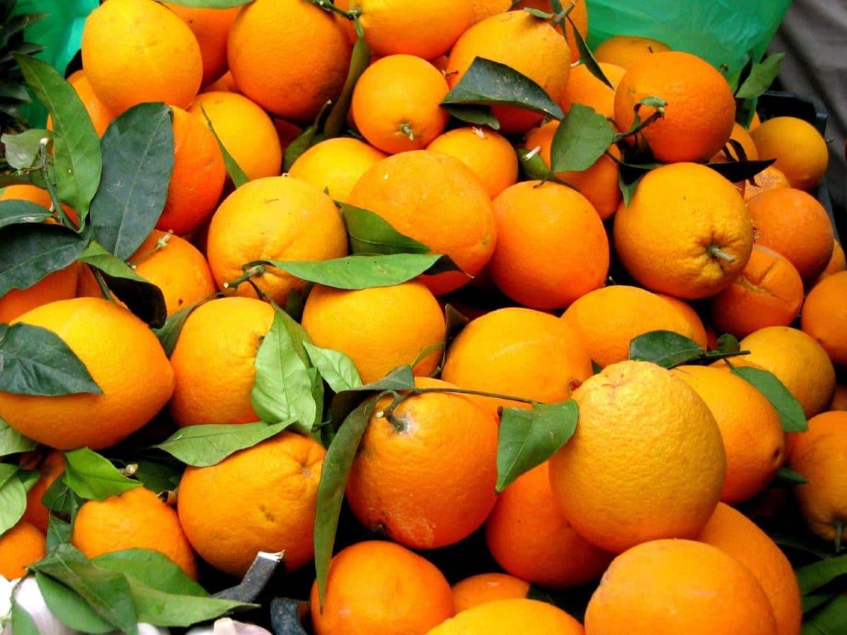 citrus.jpg (115.46 Kb)