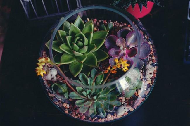 florarium14.jpg (61.35 Kb)