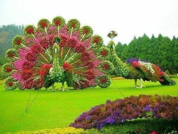 Незвичайні квіткові композиції