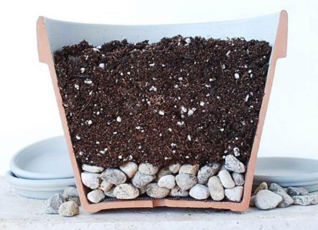 Ґрунт для кімнатних рослин