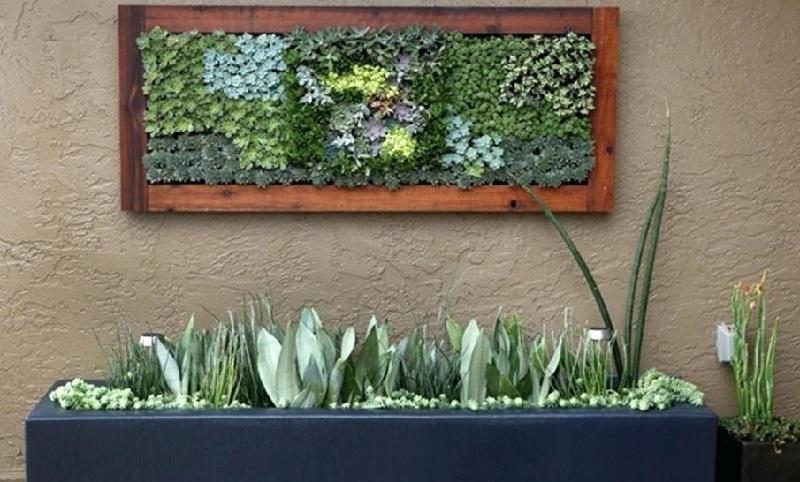 Сукулентні рослини - живі картини. Ідеї