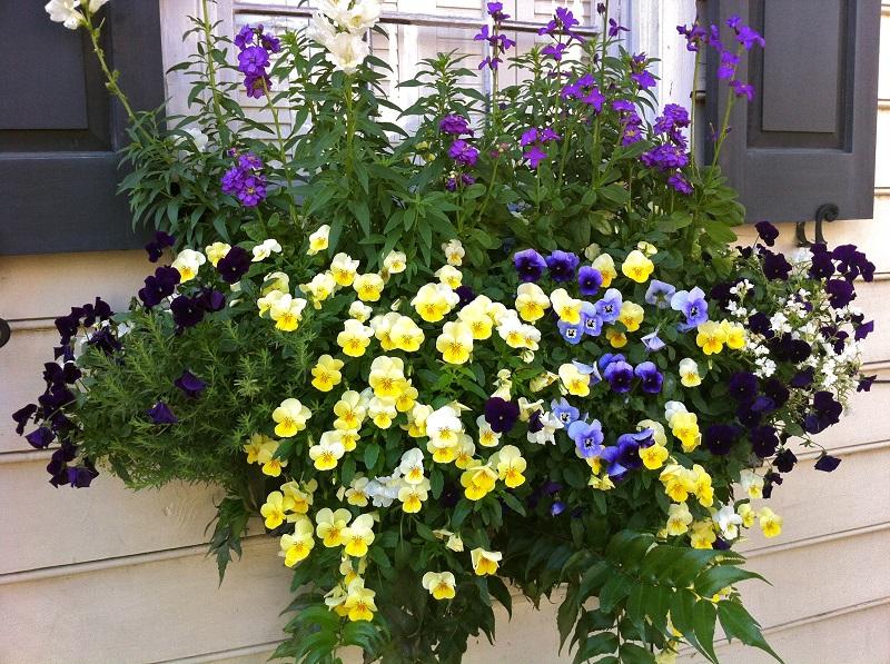 Квіти на підвіконні. Ідеї