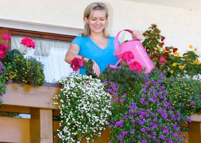 Какие цветы посадить на балконе в ящиках: красивый дизайн, ф.