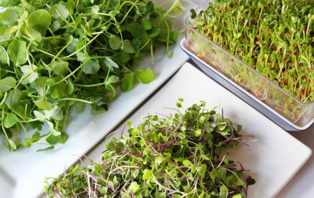 Мікрозелень на Вашому підвіконні