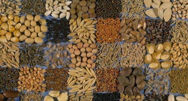 Правила зберігання насіння