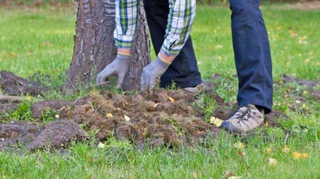 Підготовка дерев та кущів до зими