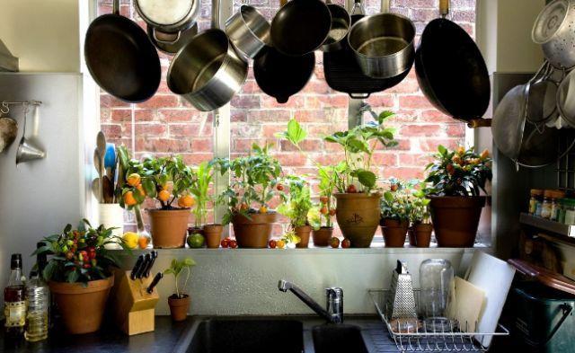 Озеленення кухні
