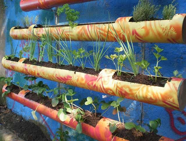 Вертикальне озеленення - ідеї для творчості