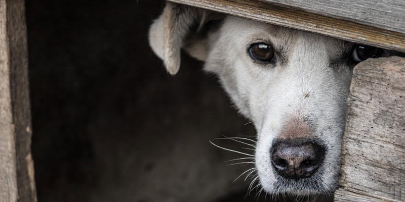 Дім для собаки: вольєр + буда