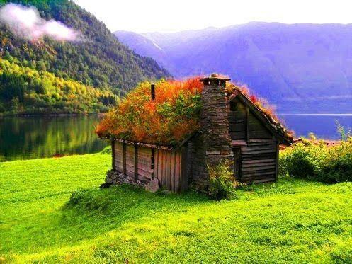 Як прикрасити будинок за допомогою зеленого даху